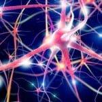 """""""Sistemul neural"""" al bitcoinului primește un upgrade cu rețelele FIBRE"""