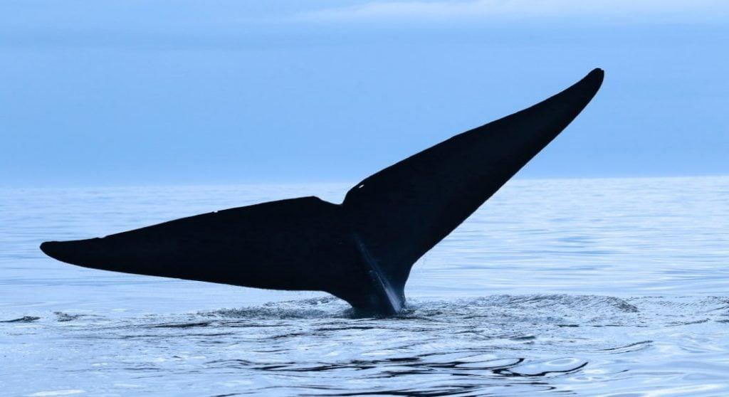 balenele