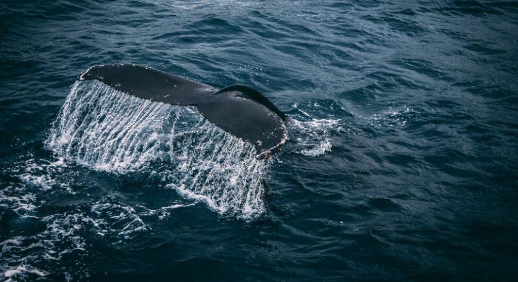 Numărul balenelor Bitcoin