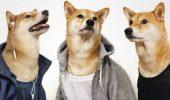 Fan-clubul DOGE